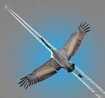 Supersonic Ooievaar
